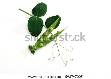 Pea pods with with tendrils
