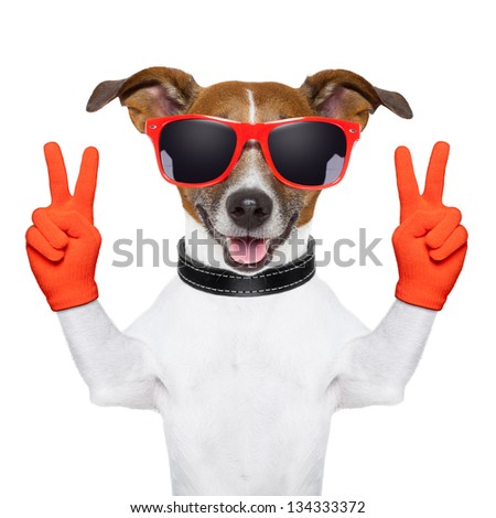 peace and victory fingers dog with red gloves and glasses