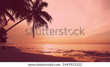 Peaceful background of perfect sea shore for summer vacation Exotic summer Sunrise. Tropical Beach sunrise. Sunset palm trees, waves, sea clouds. Beautiful pink sunset sand beach paradise island.  #1443925232