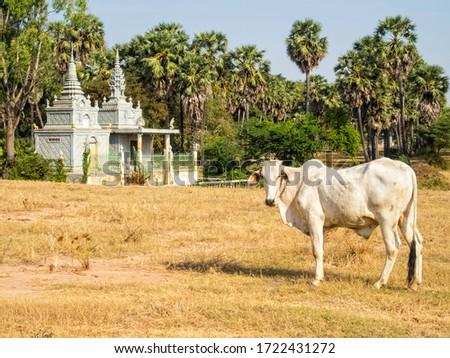 Peaceful countryside with a stupa and a cow - Roka Ar, Cambodia Stok fotoğraf ©
