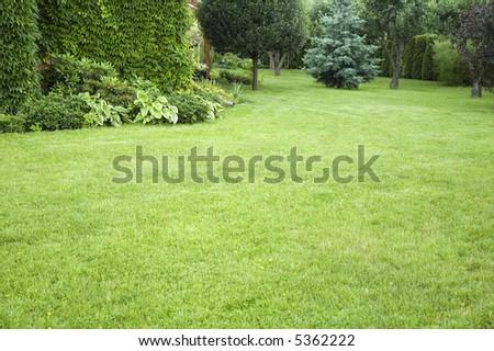 peaceful garden. freshly lawn grass. summertime