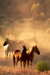 peaceful gather of four horses at sunset in the desert