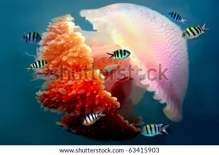 Peaceful image of a mosaic jellyfish