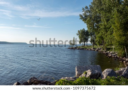 Peaceful Lake Scene with Curving Shoreline and Soaring Seagull