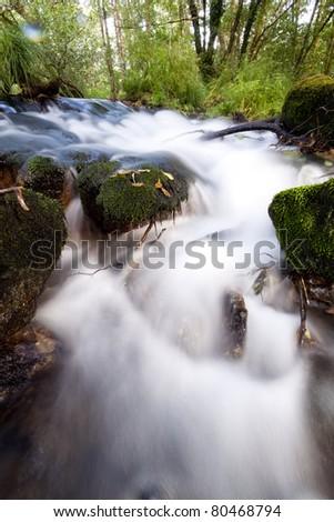 peaceful mountain stream flows through forest