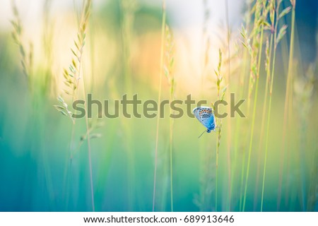 Peaceful nature summer meadow bright flowers in green grass background.