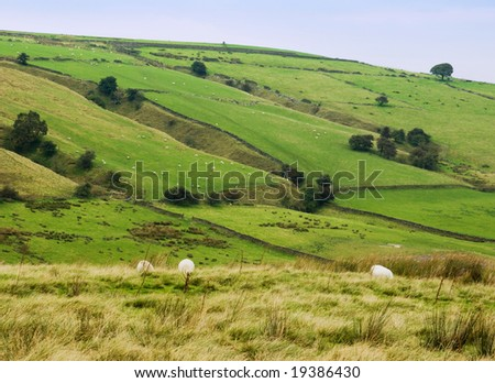 Peaceful rural scene of typical English countryside - sheep graze in grassy fields on a hazy autumn day in the Yorkshire Dales, England - stock photo