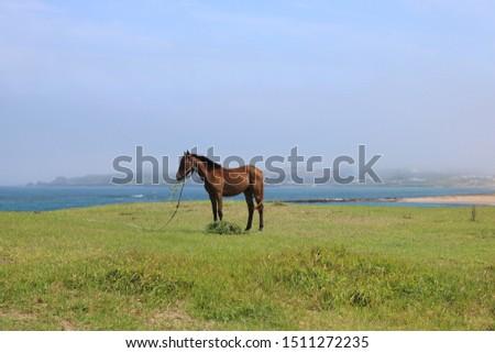 Peaceful sceneries of Jeju Island, South Korea #1511272235