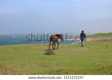 Peaceful sceneries of Jeju Island, South Korea #1511272247