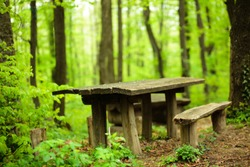 Peaceful spot in a lush green forest. Wooden table and benches in picnic area.