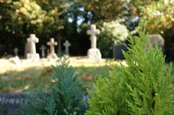Peaceful sunny day in Christian cemetery church. Green conifer trees in foreground, space to add text on blurry graveyard, cross headstones, yellow leaves trees in background. Christianity concept.