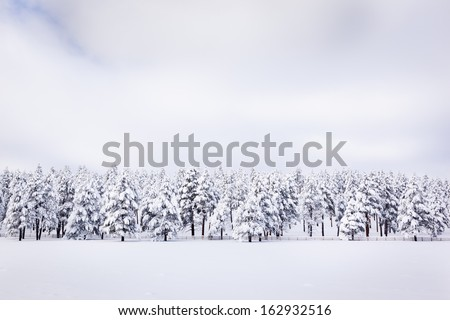 Peaceful Winter Landscape