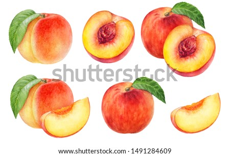 Peach fruit watercolor isolated on white background