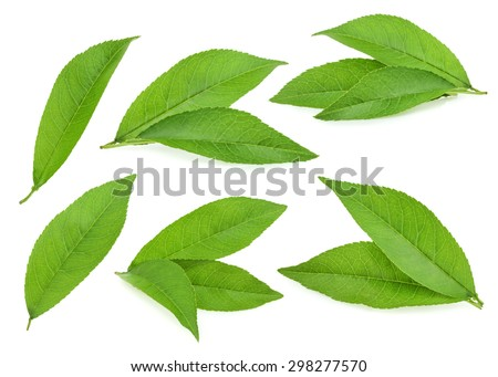 Peach leaves isolated on white background #298277570