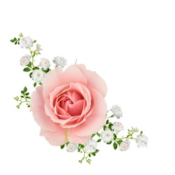 Peach roses with spray of small white roses, isolated on white.