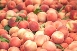 Peaches close up. Early morning in farmers market. Colorful fruit background