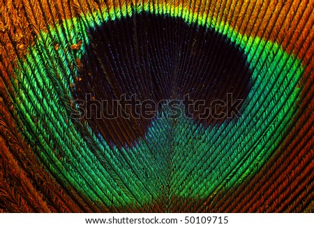 Peacock feather abstract background