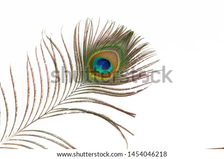 Peacock feather on white background #1454046218