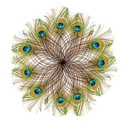 Peacock feathers on a white background. Carnival decorations