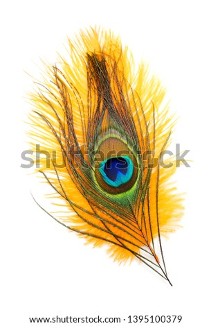 Peacock feathers on white background. Carnival. Colored feather. #1395100379