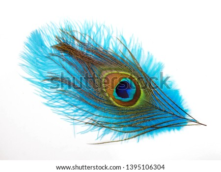 Peacock feathers on white background. Carnival. Colored feather. #1395106304