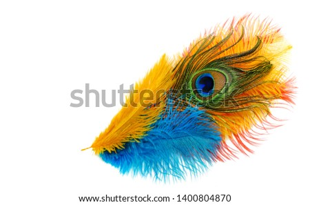 Peacock feathers on white background. Carnival. Colored feather. #1400804870