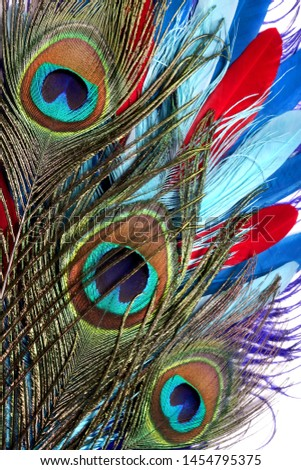 Peacock feathers on white background. Carnival. Colored feather. #1454795375