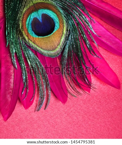 Peacock feathers on white background. Carnival. Colored feather. #1454795381