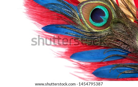 Peacock feathers on white background. Carnival. Colored feather. #1454795387