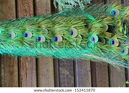 Peacock's tail on wooden background