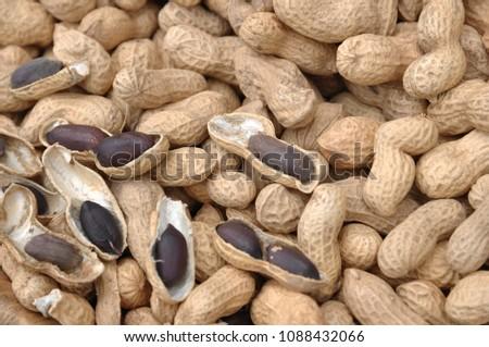 Peanut is a very nutritious nut. #1088432066