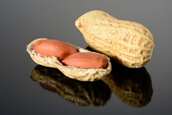 Peanut on glossy black surface with reflection. Whole peanut and open shell with two kernels macro close up, high resolution full depth of field.