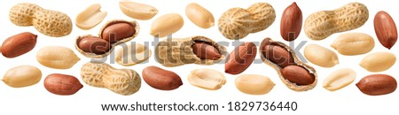 Peanut set isolated on white background. Whole and shelled groundnuts. Package design element with clipping path
