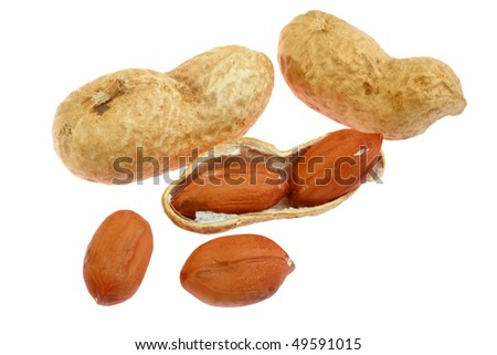 Peanut with pods. Isolated on white background
