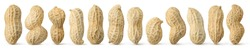 Peanuts diversity. 12 raw shelled peanuts of different shapes standing vertically isolated on white background