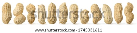 Peanuts diversity. 12 raw shelled peanuts of different shapes standing vertically isolated on white background Сток-фото ©