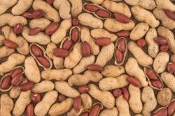 Peanuts seed placed on Peanuts.