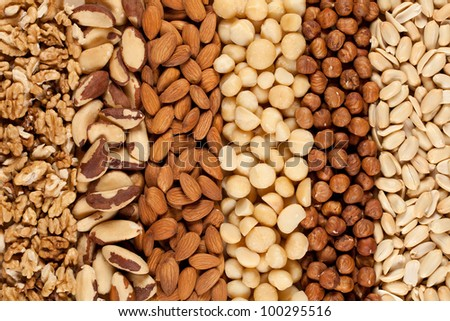 Peanuts, walnuts, almonds, hazelnuts, Brazil nuts and Macadamias side by side