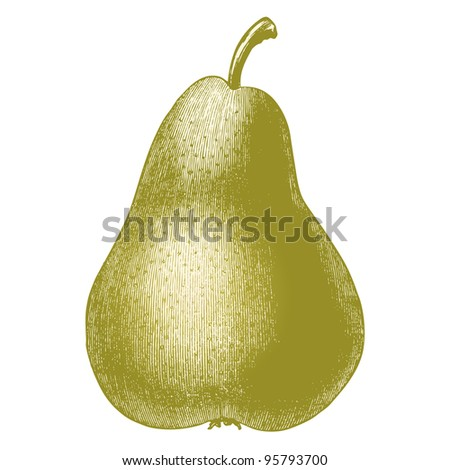 "Pear fruit isolated on white background - vintage engraved illustration - ""Dictionnaire encyclopedique universel illustre"" By Jules Trousset -1891 Paris - stock photo"