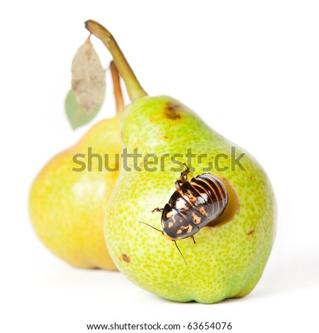 pear with cockroach