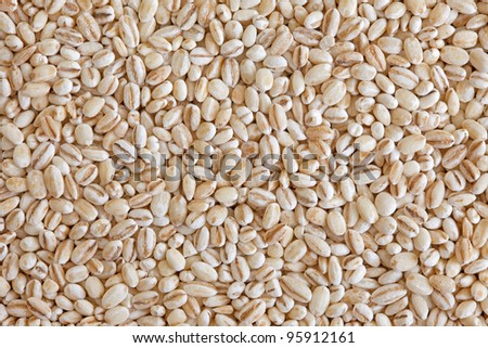 Pearl barley (pearled barley) texture background full frame. Cooked mainly in soups and stews, also as an ingredient for stuffing cooked potages or sweet dishes.