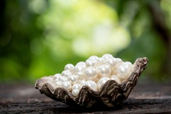 Pearl on shell and on nature background.