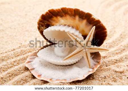 pearl on the seashell . The exotic sea shell . treasure from the sea .