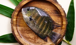 Pearl Spot fish, known as Karimeen in Kerala, is one of the most widely available varieties in the Kerala backwaters