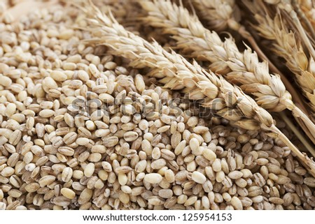 Pearled barley grains and stalks of wheat.