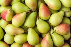 Pears, Large Group, Background – Italian Cultivar of Green Pear