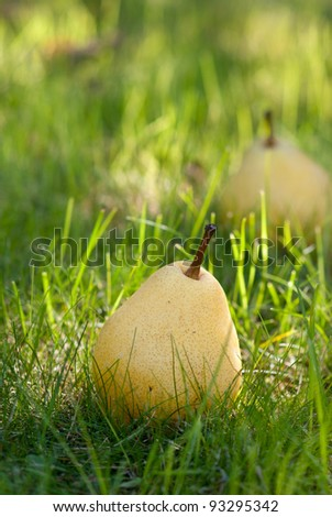 pears lie on the grass