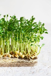 Peas microgreens with seeds and roots. Sprouting Micro greens on Jute Microgreens Grow Mats. Sprouting Microgreens on the Hemp Biodegradable Mats. Sprouted peas Seeds. Growing Medium For Microgreens.