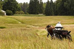 Peasant in horse cart on the field of grass moving away. brown horse and a man in a white shirt at the bottom of the hill near the forest. Tall grass in the wind