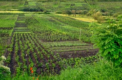 peasants' gardens are divided into pieces, vegetable beds